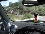 One Minnie watches another MINI.jpg